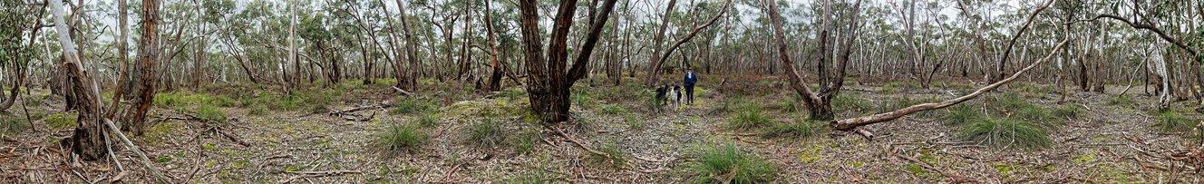 Dereel-bushland-reserve.jpeg