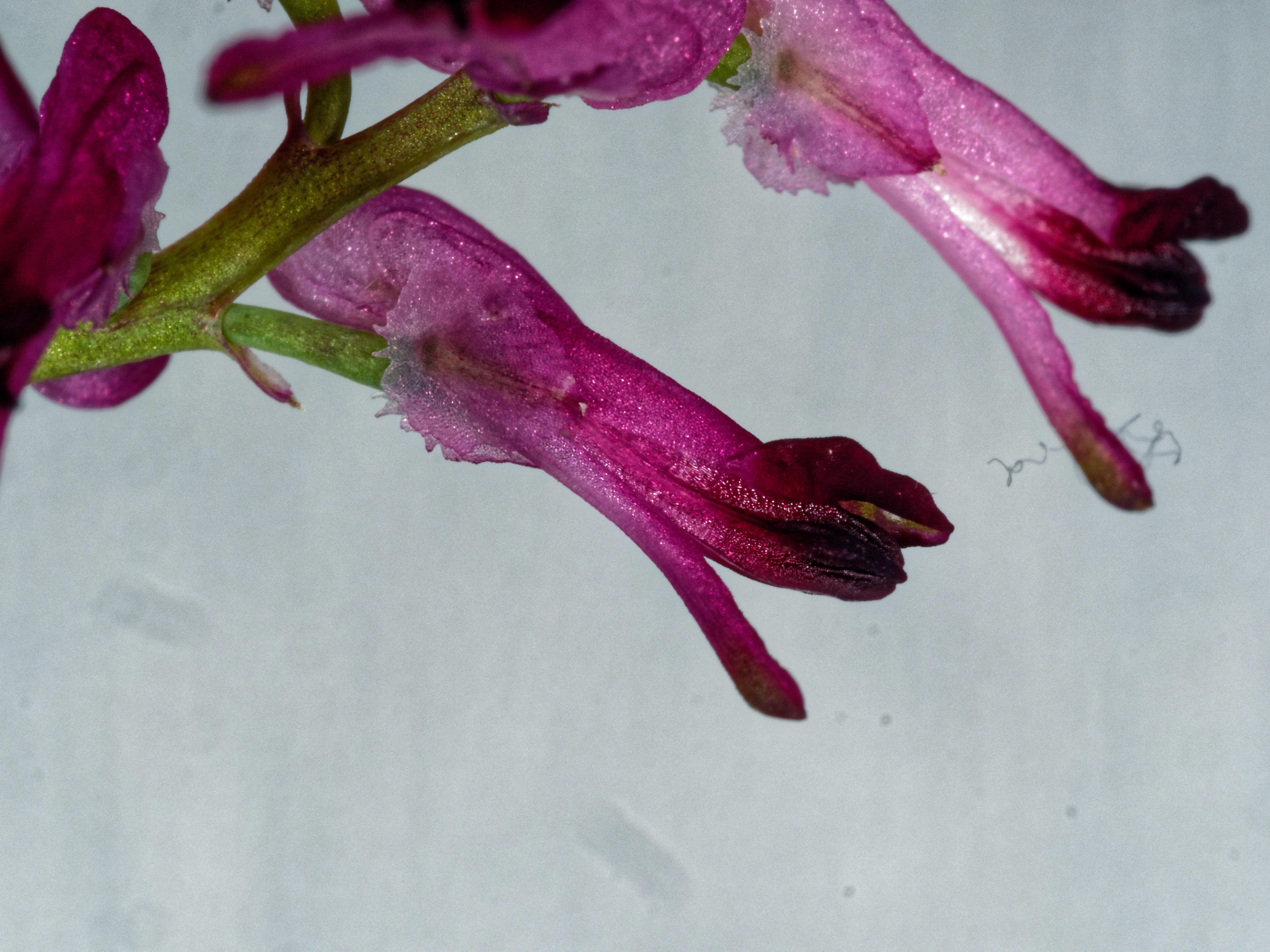 Wildflowers-11.jpeg
