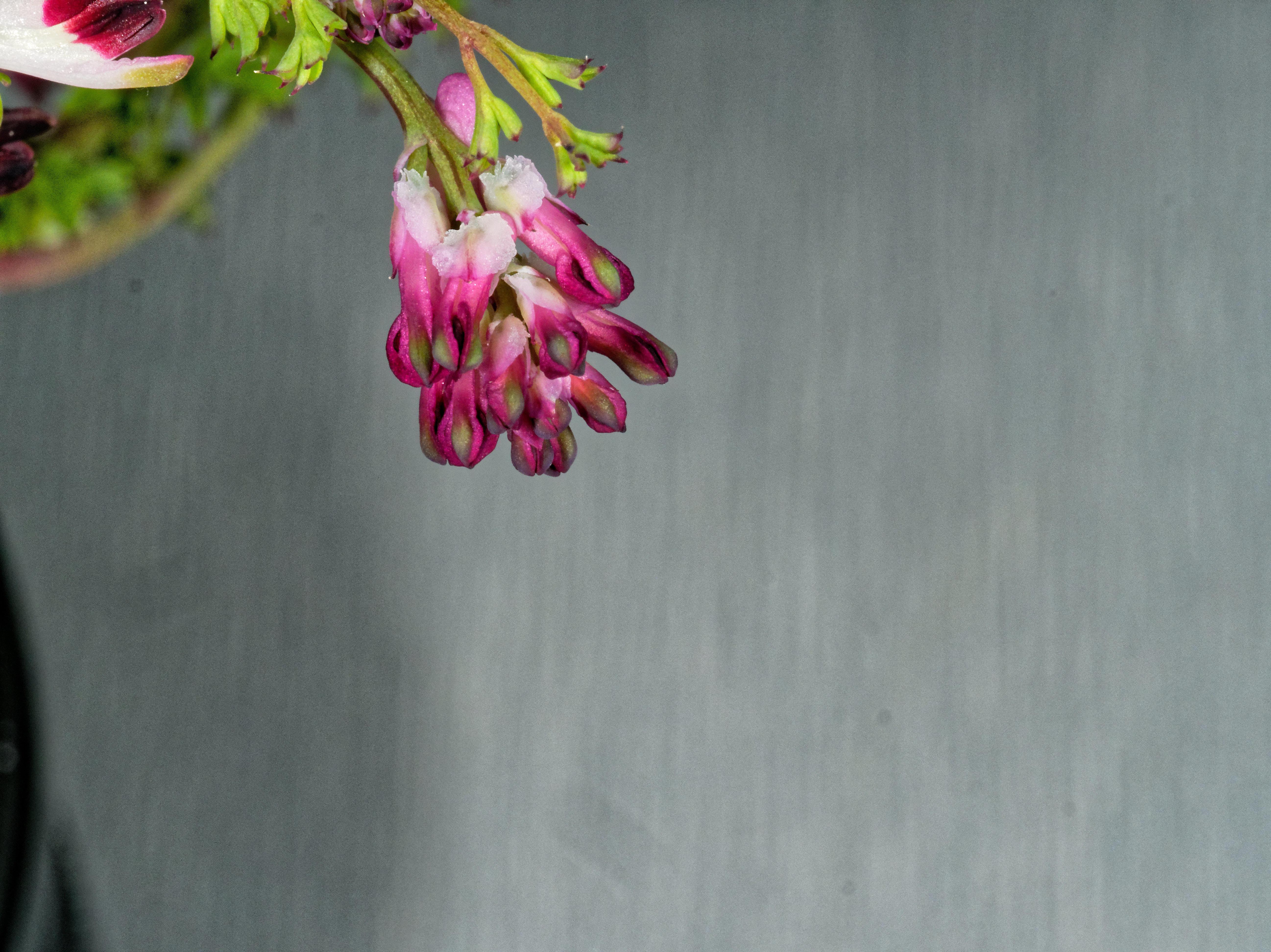 Wildflowers-21.jpeg