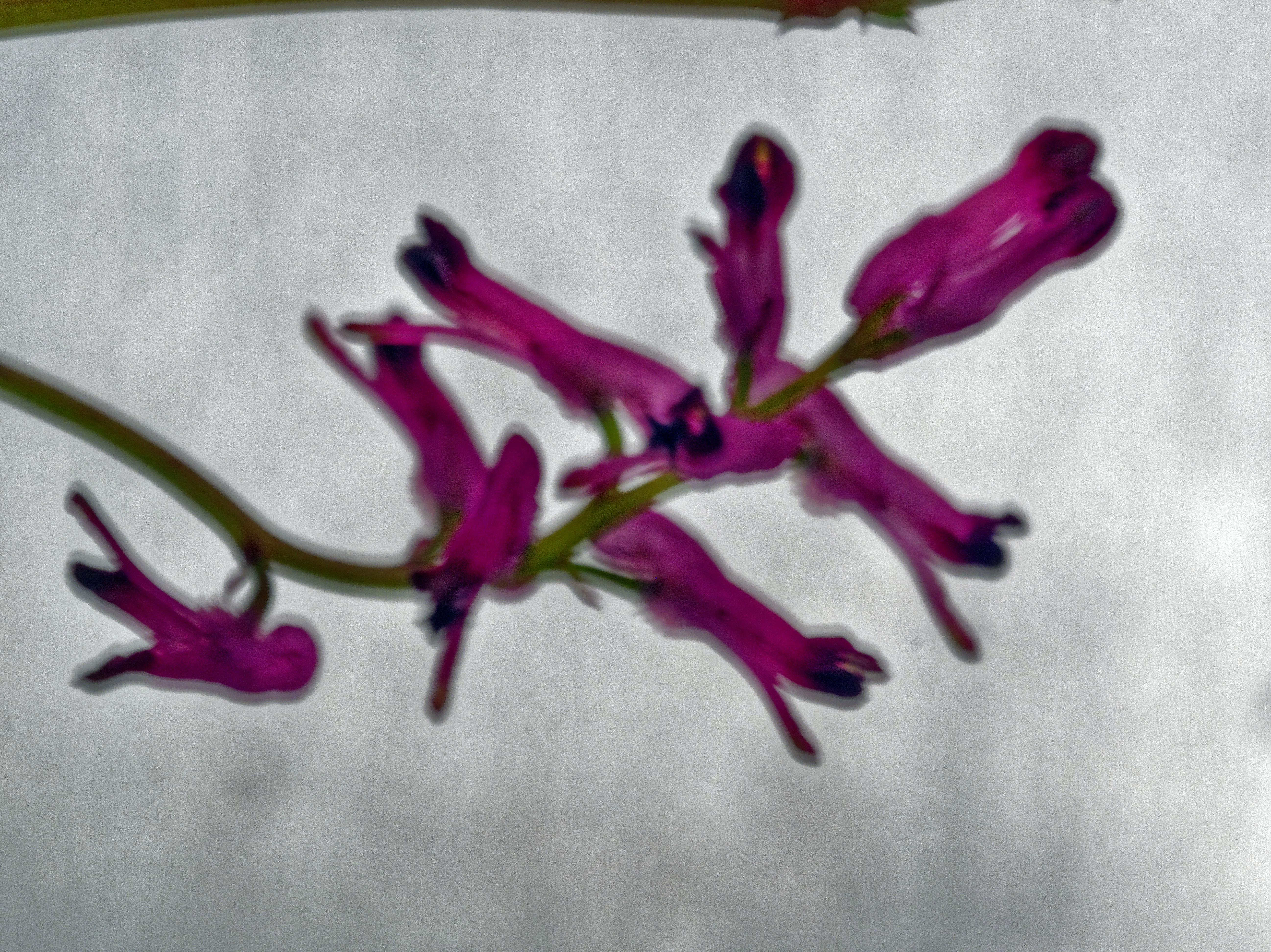 Wildflowers-7.jpeg