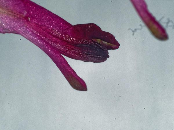 Wildflowers-15.jpeg