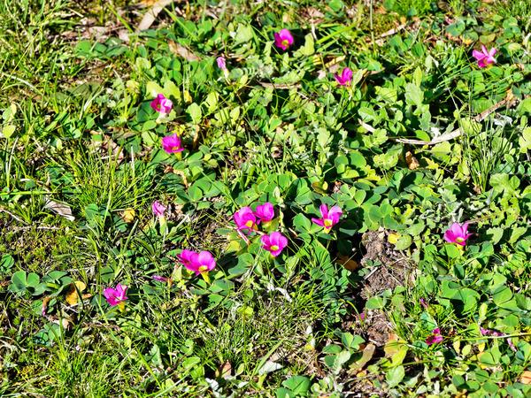 Spring-coming-2.jpeg