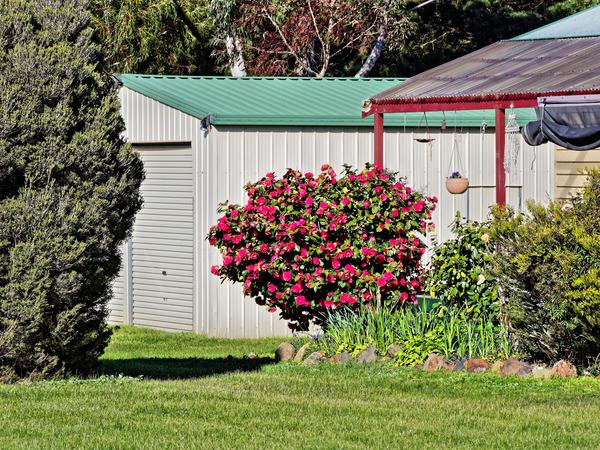 Neighbours-garden-1.jpeg