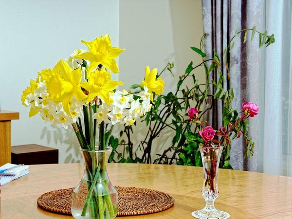 Daffodils-Roses.jpeg
