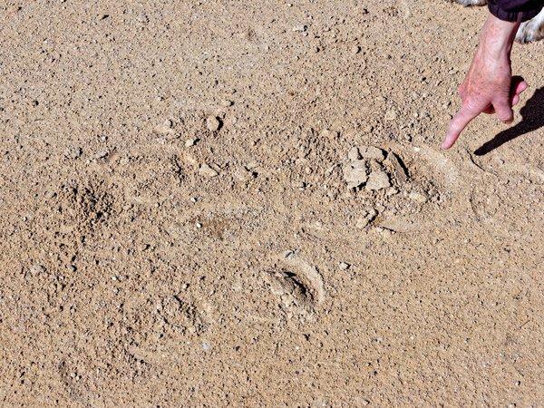 Hoofprints-2.jpeg