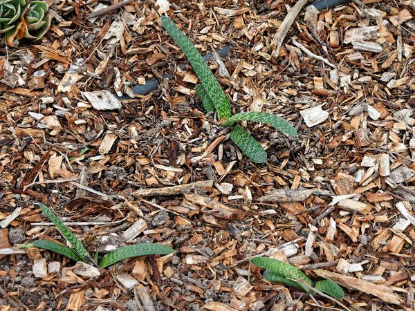 Succulents-5.jpeg