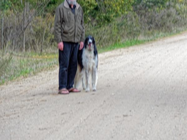 Greg-and-dogs-17.jpeg