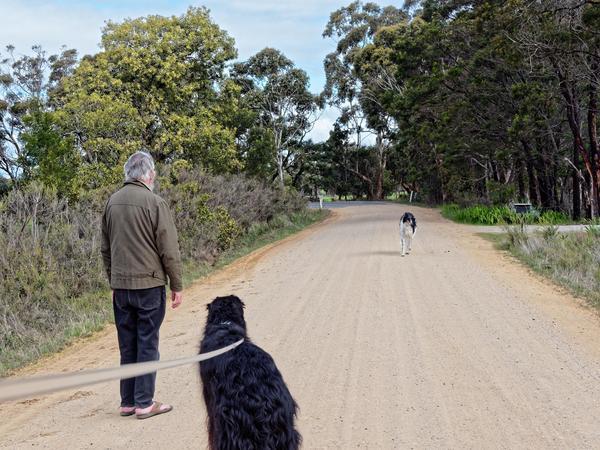 Greg-and-dogs-21.jpeg