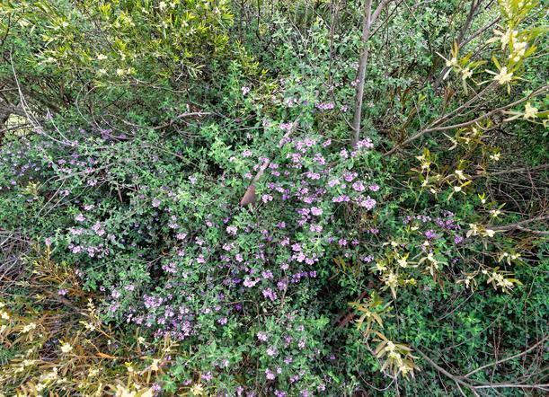 Wildflower-1-1.jpeg