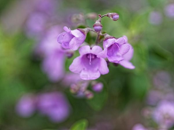 Wildflower-1-2.jpeg