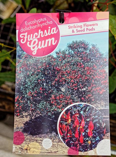 Eucalyptus-dolichorhyncha-1.jpeg