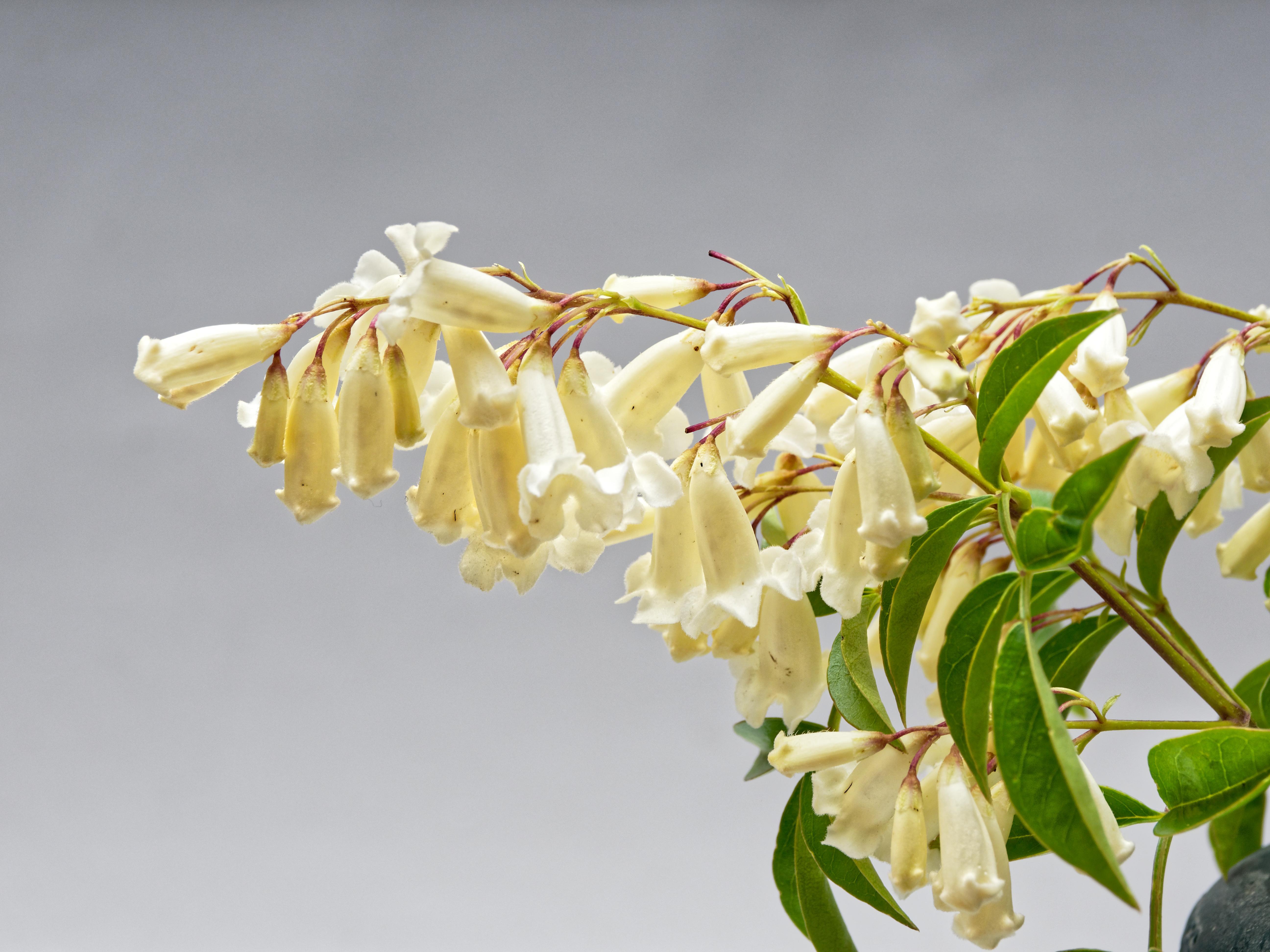 Mystery-flower-1.jpeg