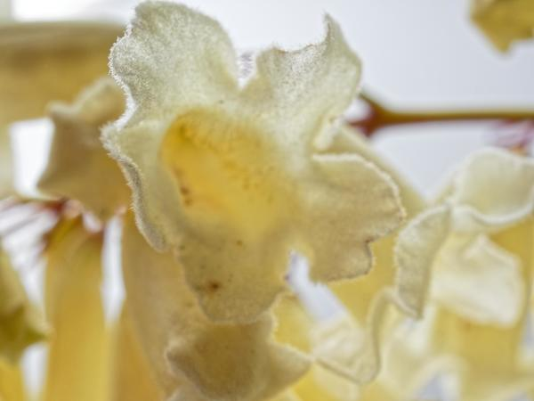 Mystery-flower-7.jpeg