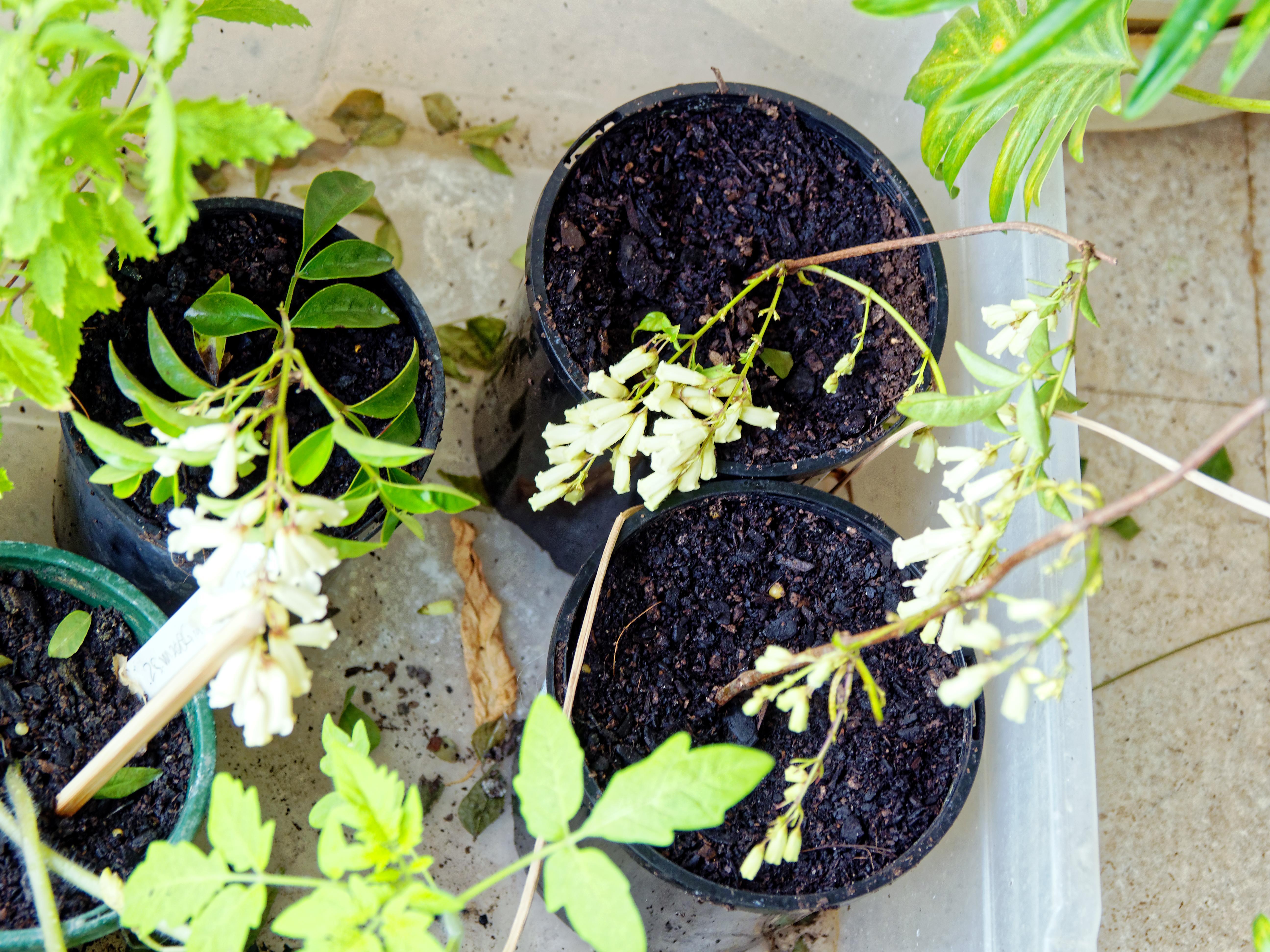 Mystery-plants.jpeg