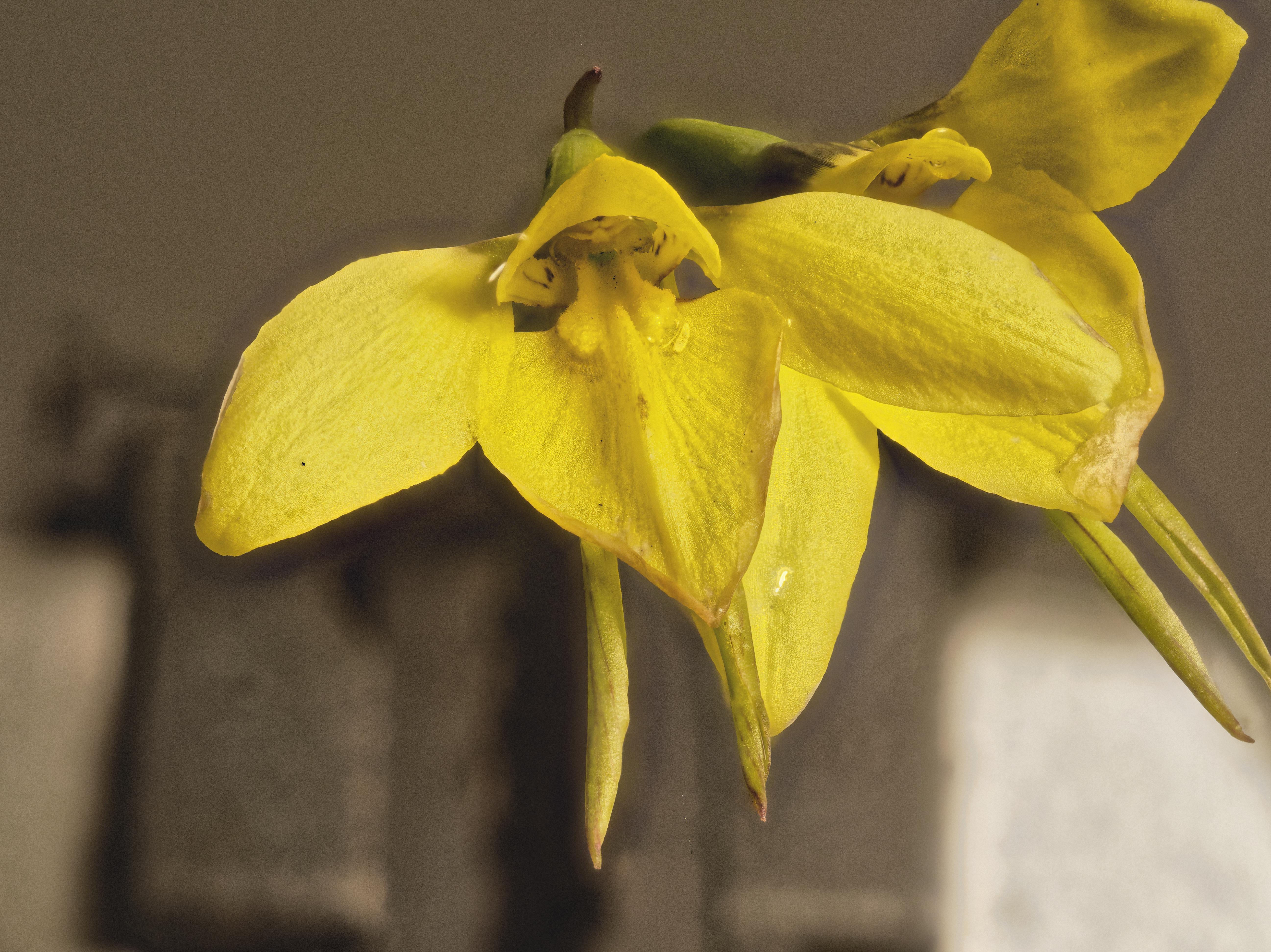 orchid-2-PMax.jpeg
