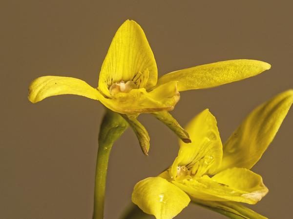orchid-1-DMap.jpeg
