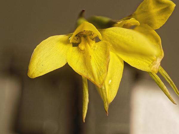 orchid-2-DMap.jpeg
