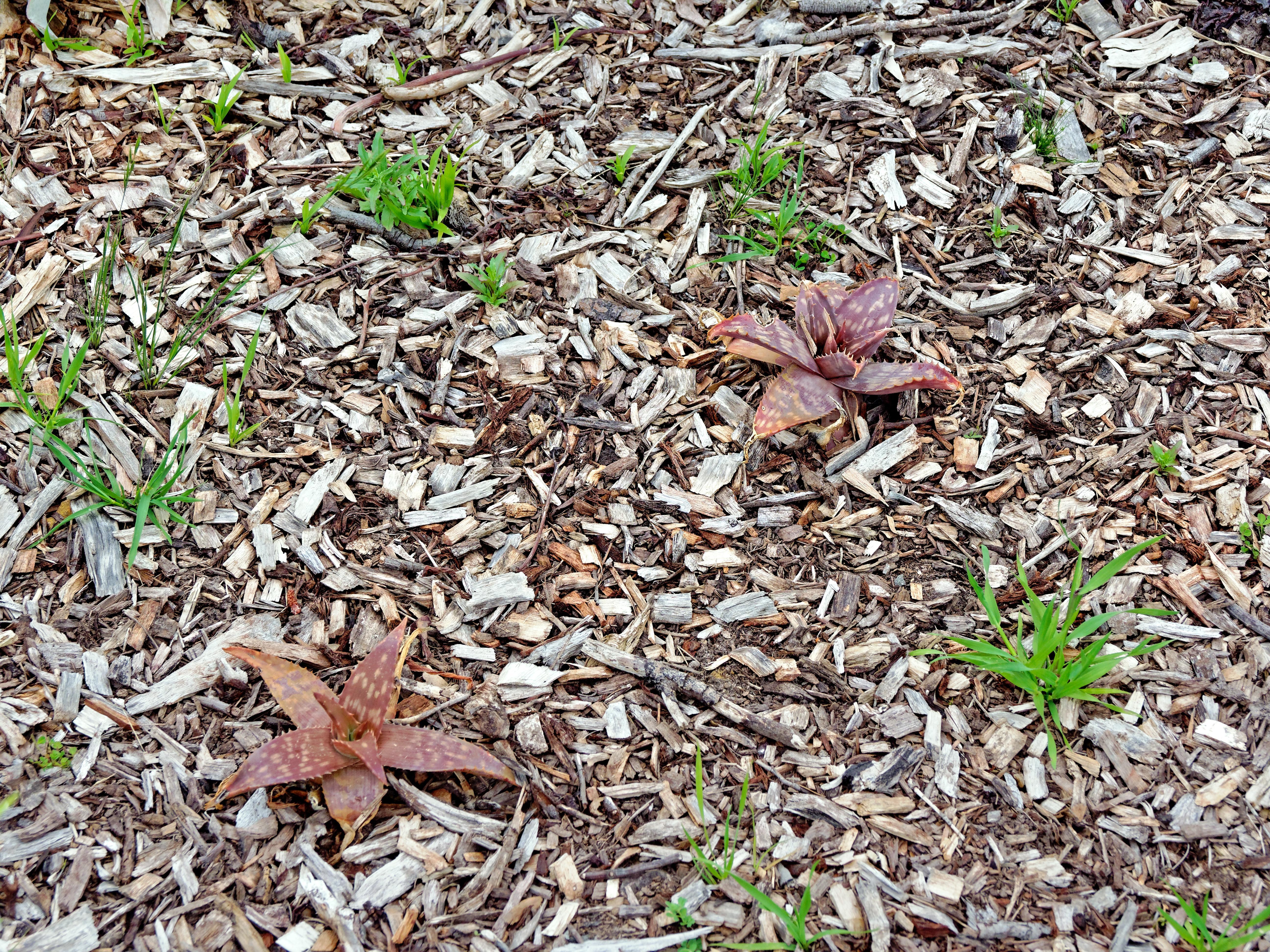 Succulent-garden-2.jpeg