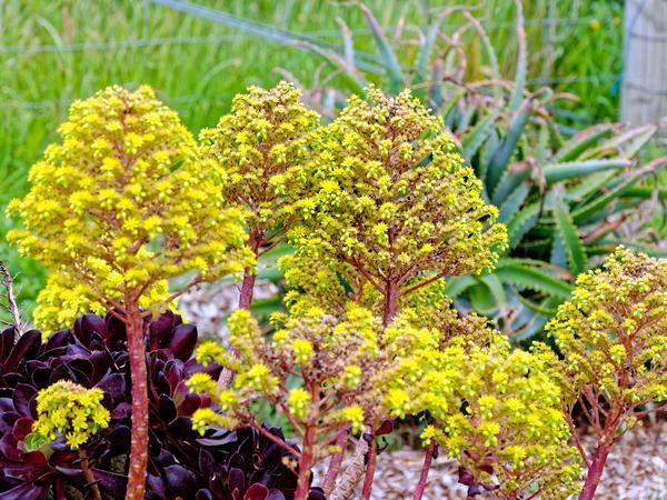 Succulent-garden-4.jpeg