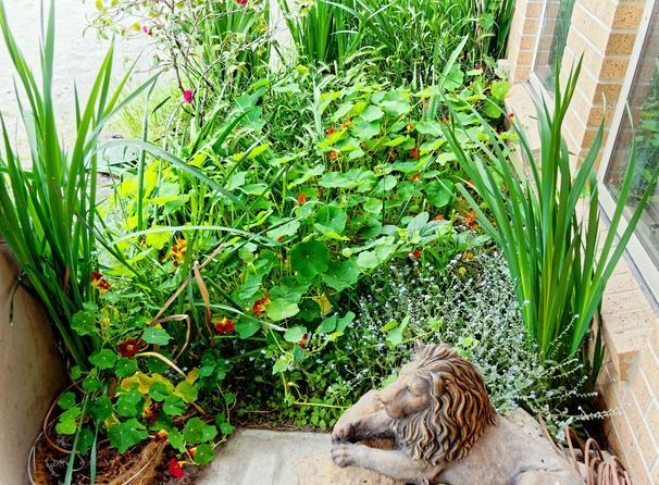 Front-garden-2.jpeg