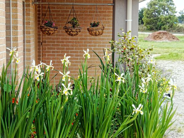 Irises-3.jpeg