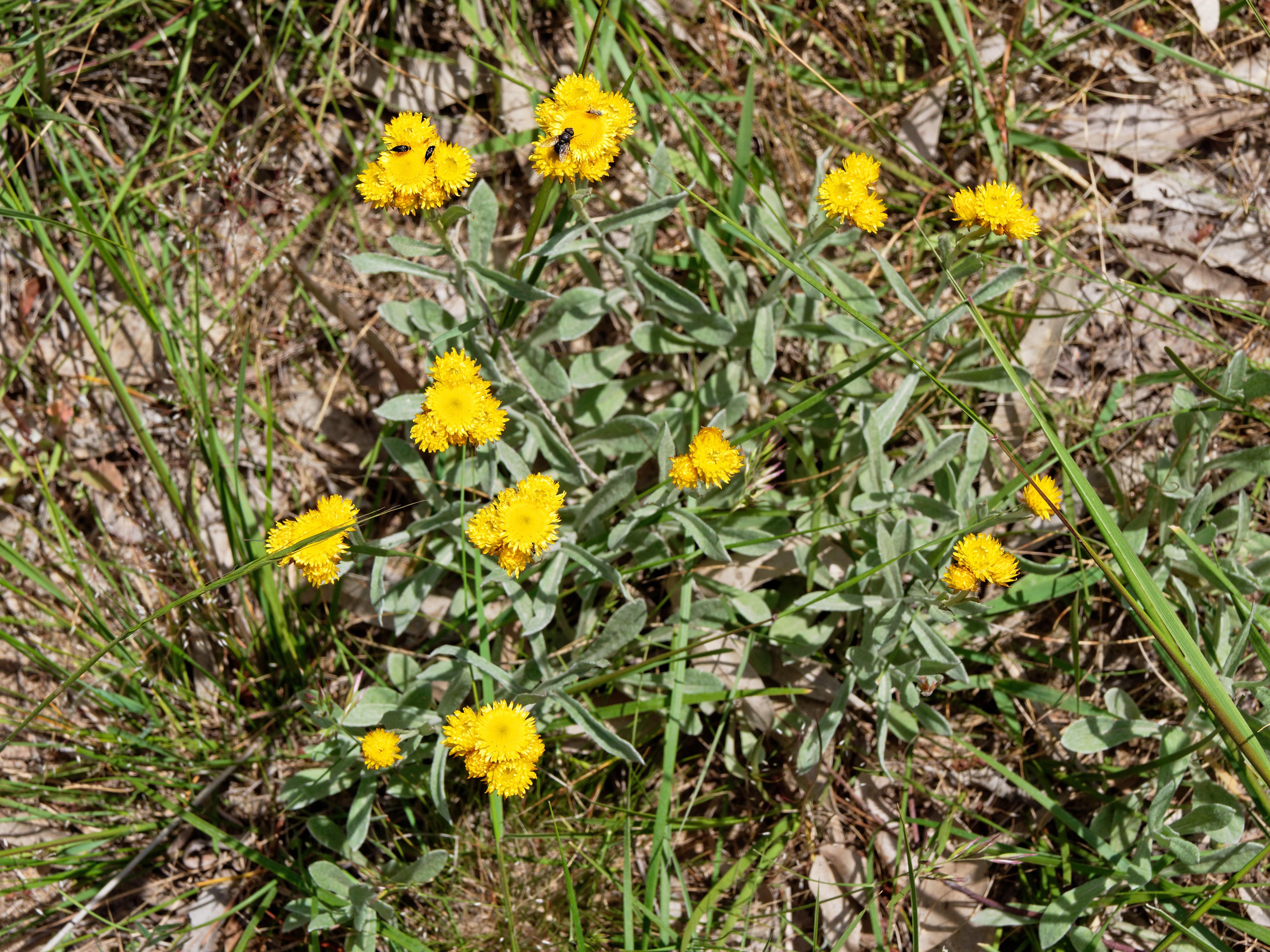 Wildflower-1.jpeg