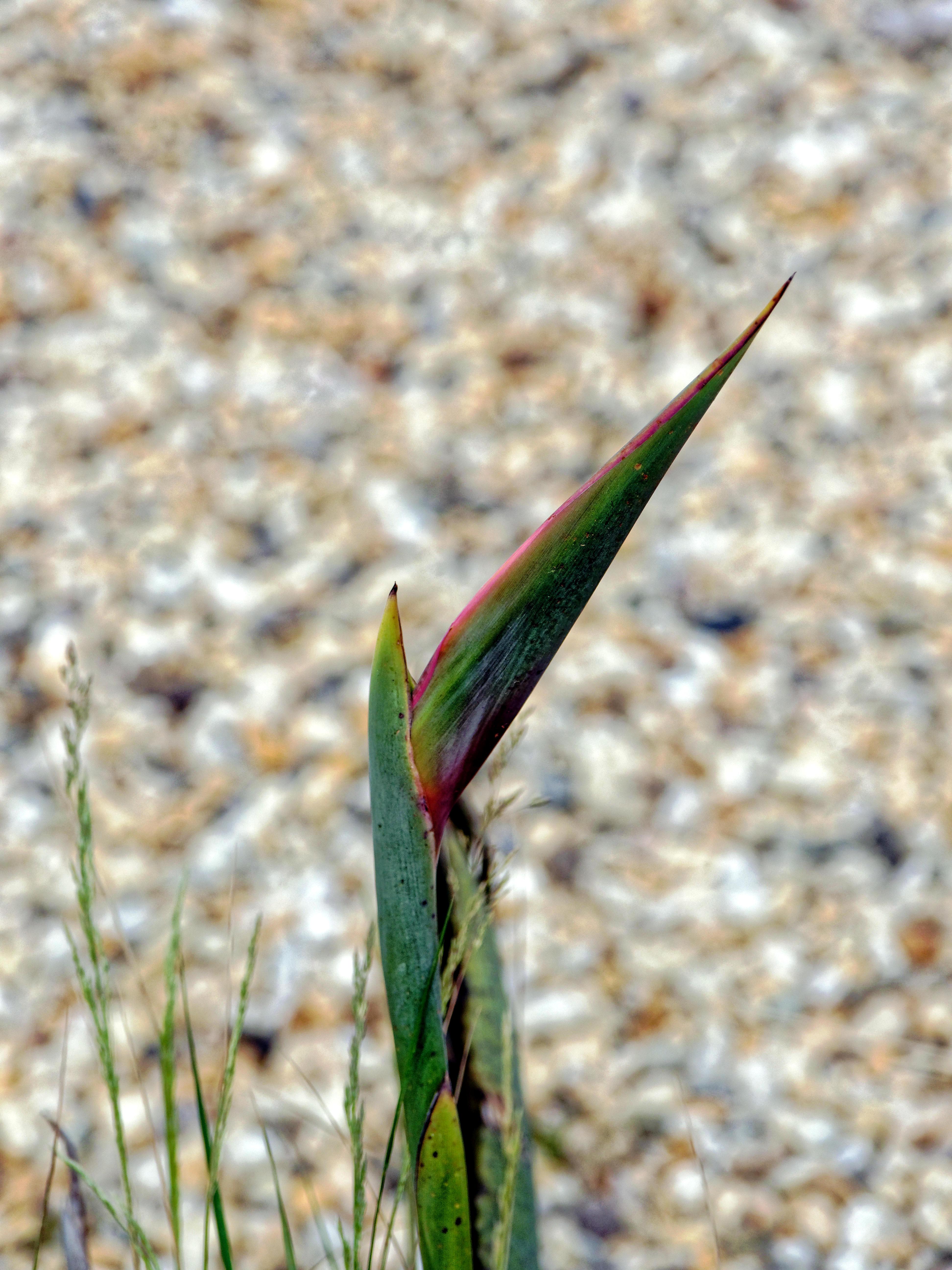 This should be Strelitzia-reginae.jpeg.  Is it missing?