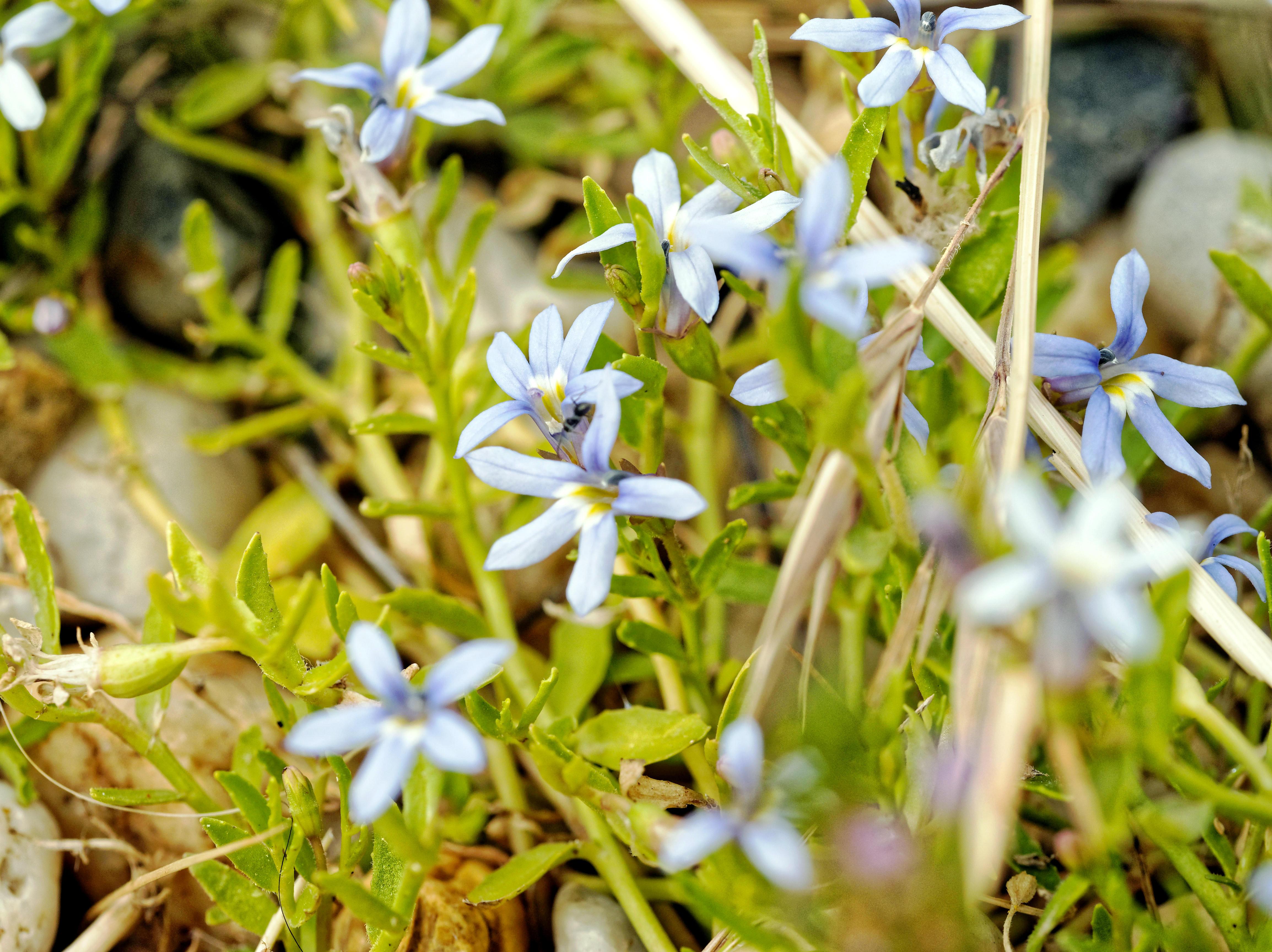 Wildflower-3.jpeg