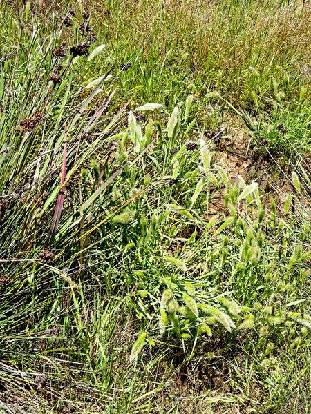 Grasses-2.jpeg