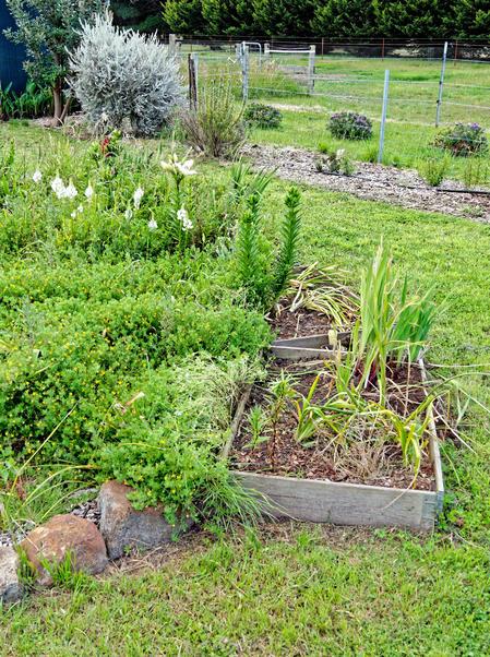 Garden-bed.jpeg