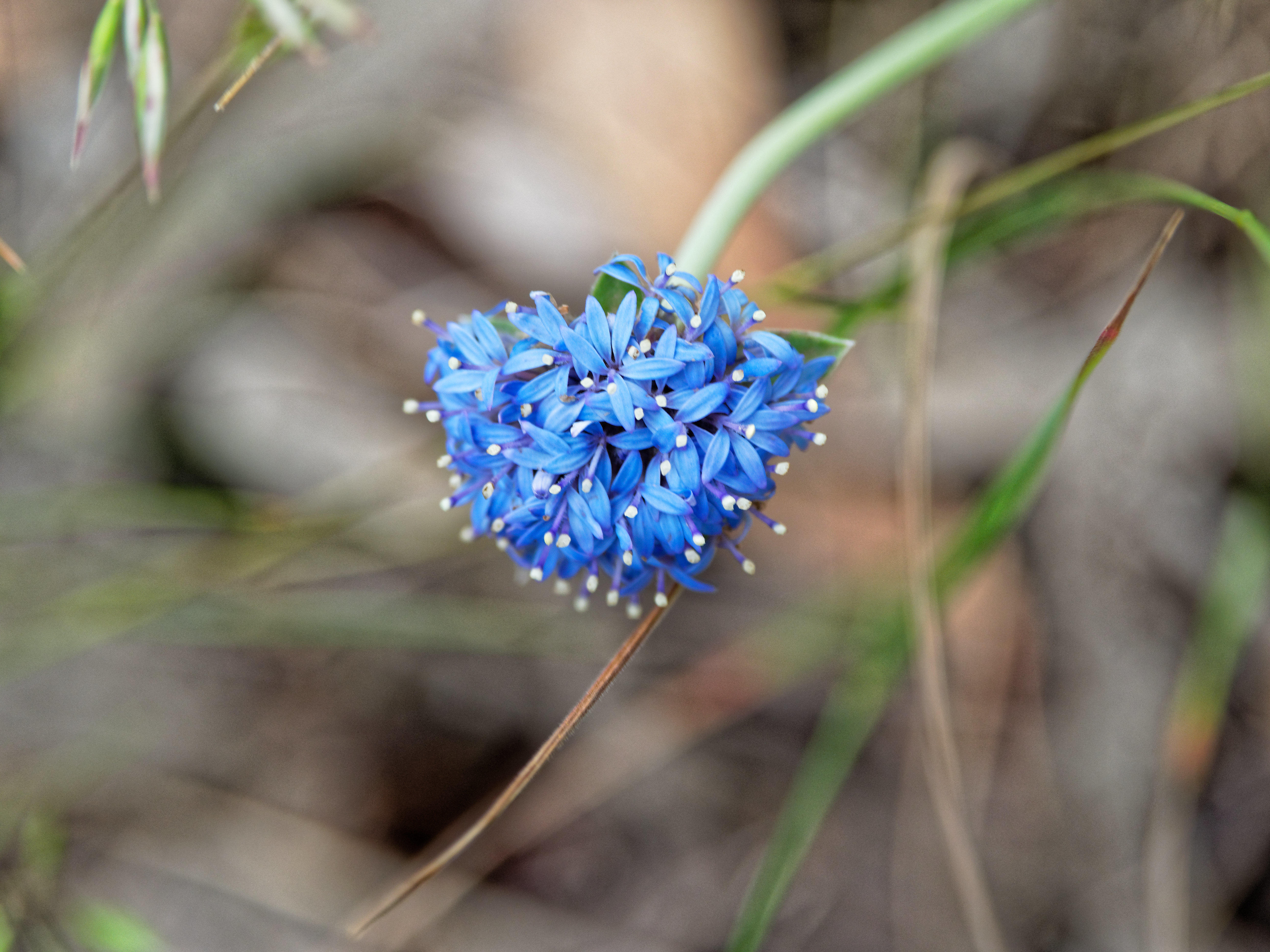 This should be Wildflower-1-2.jpeg.  Is it missing?