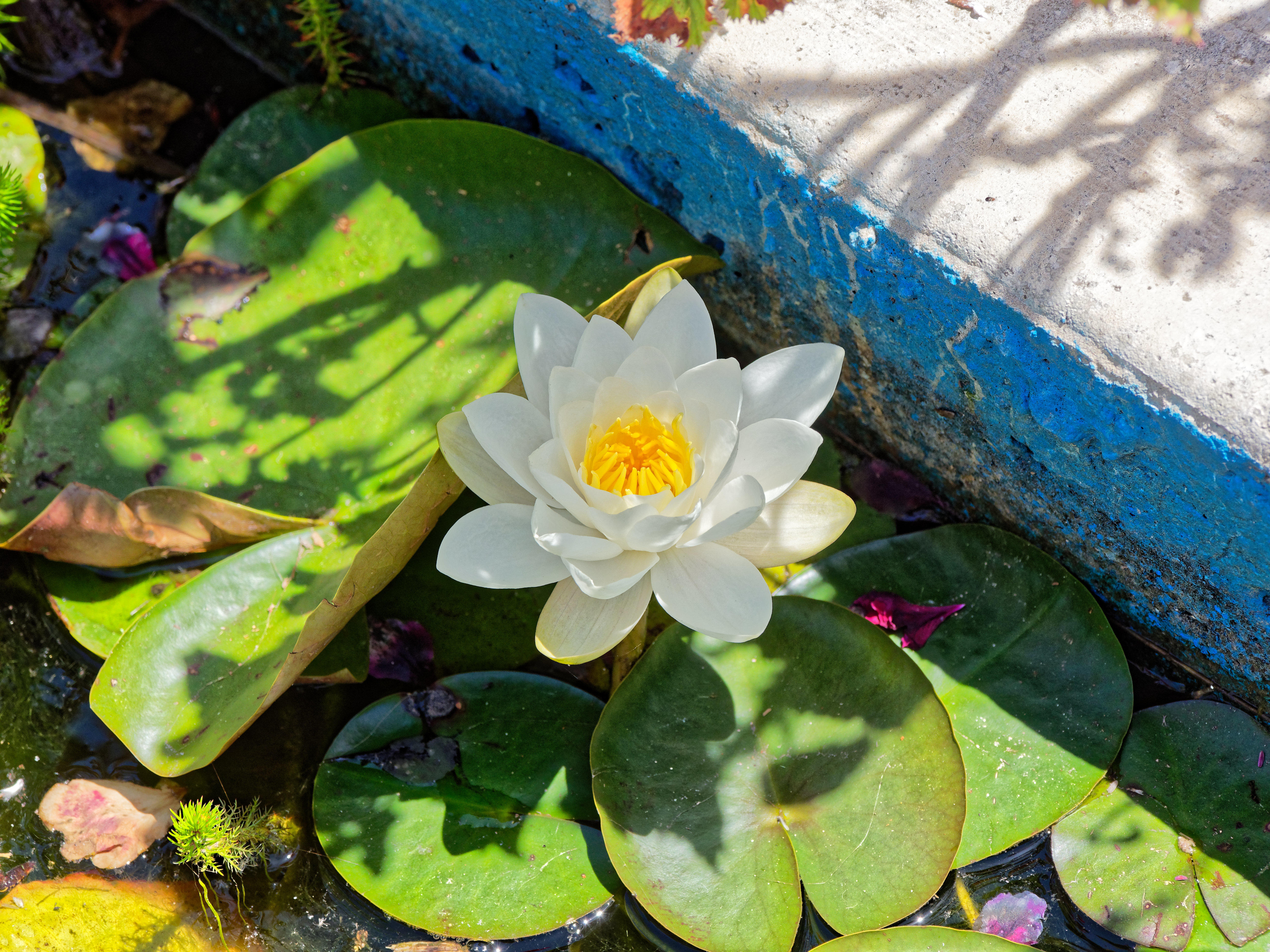 This should be Water-lily.jpeg.  Is it missing?