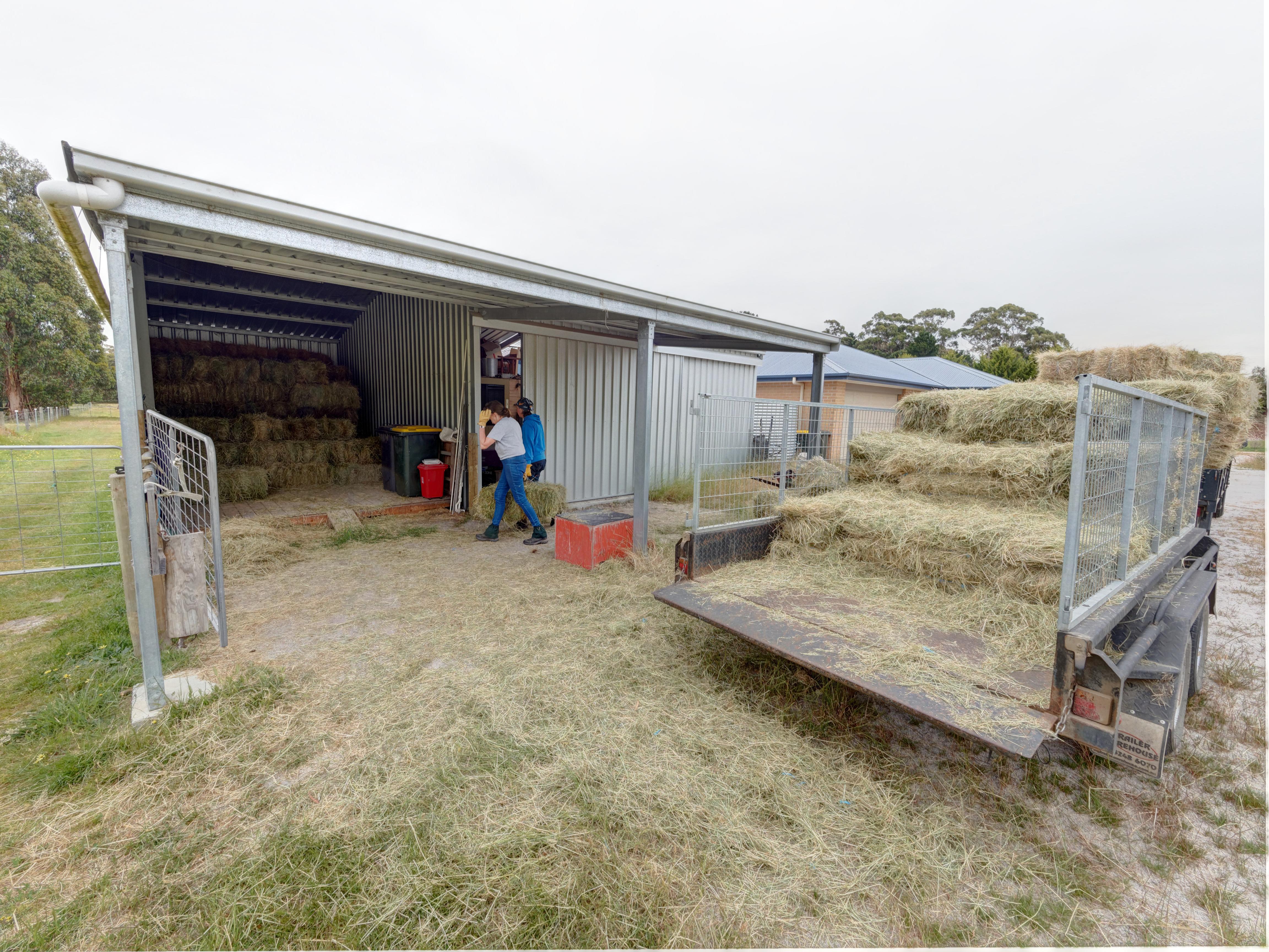 Unloading-hay-a-0.jpeg