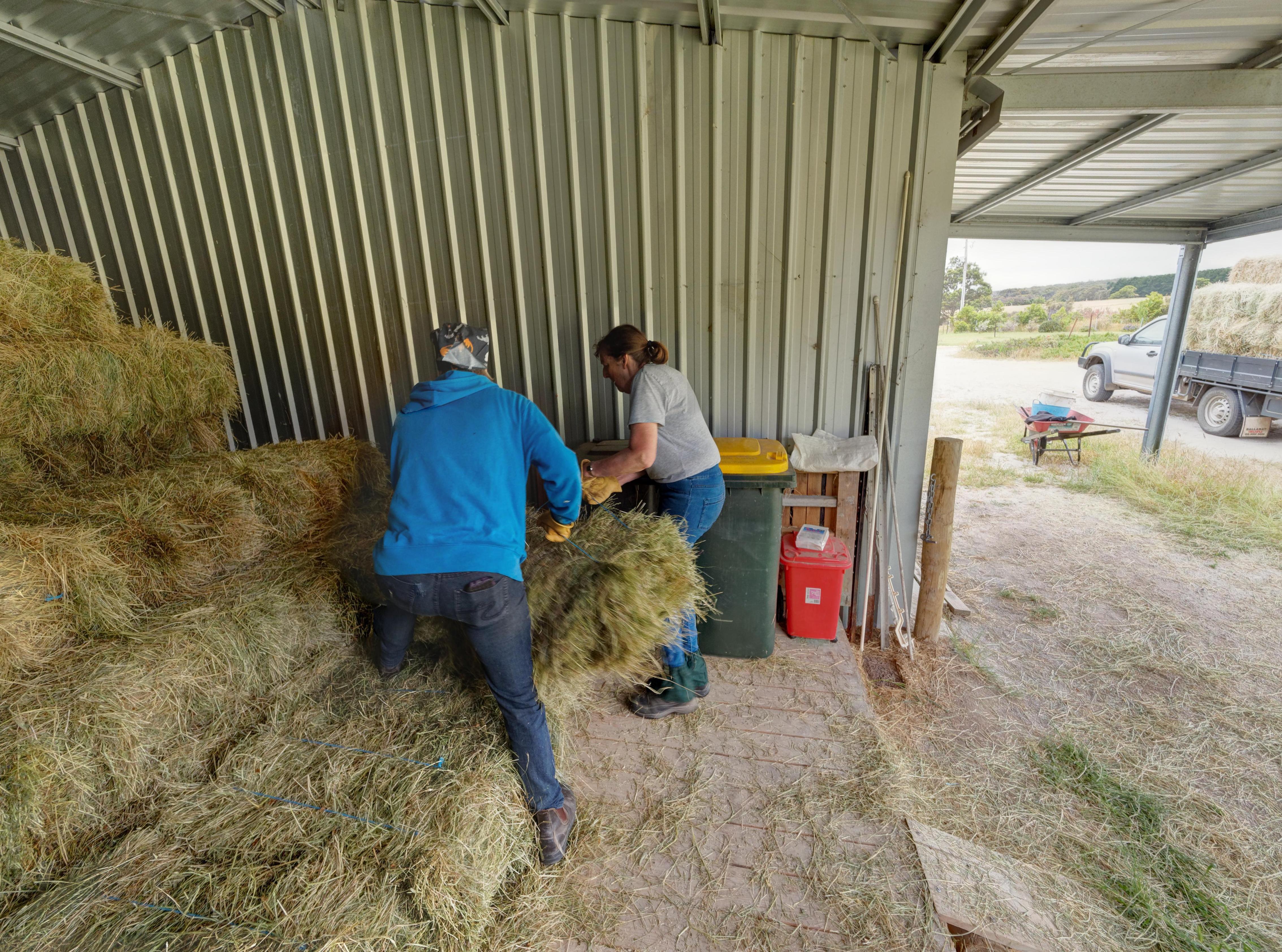 Unloading-hay-a-7.jpeg