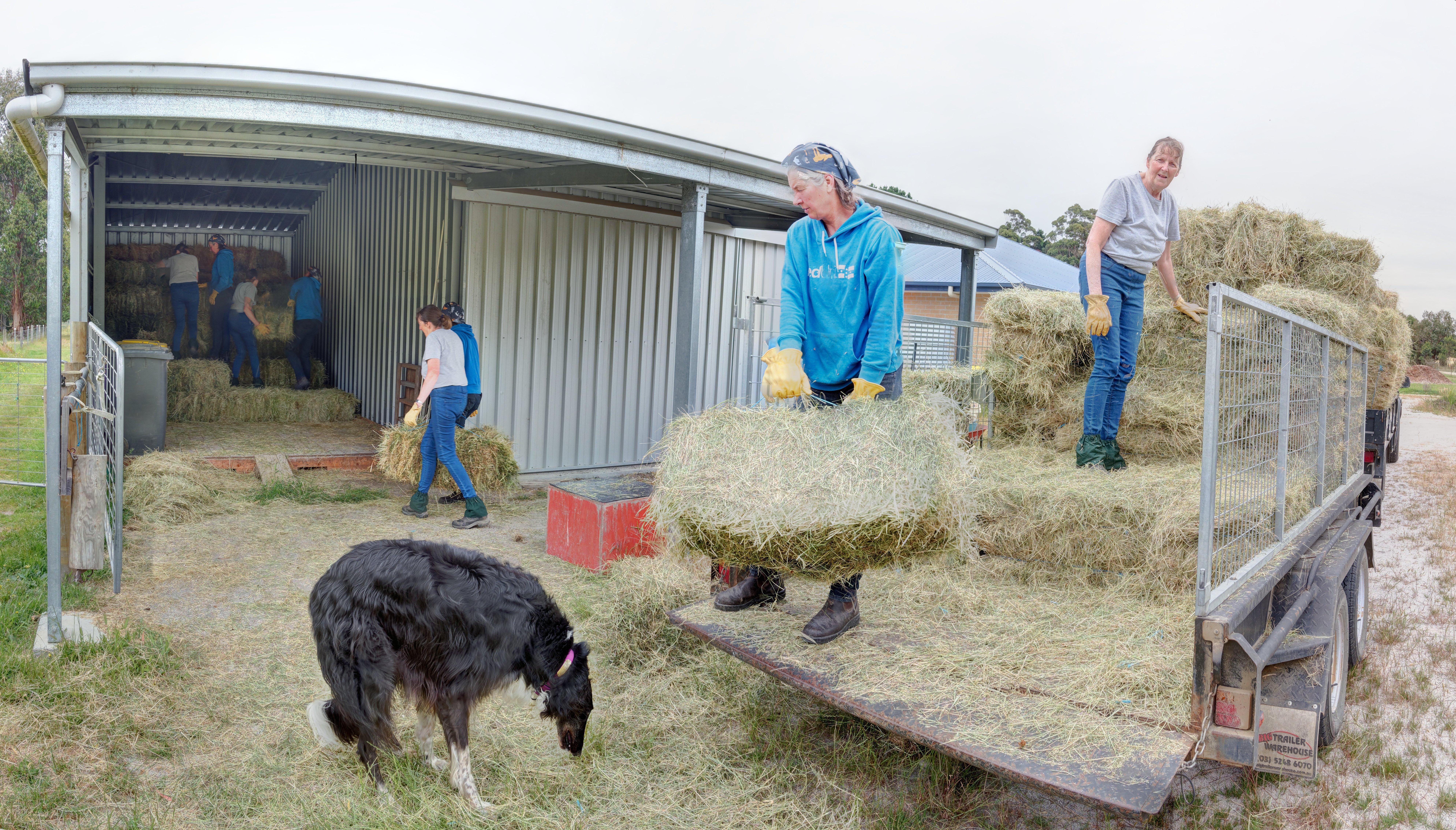 Unloading-hay.jpeg
