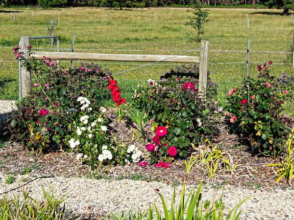 Roses-gladiolus.jpeg