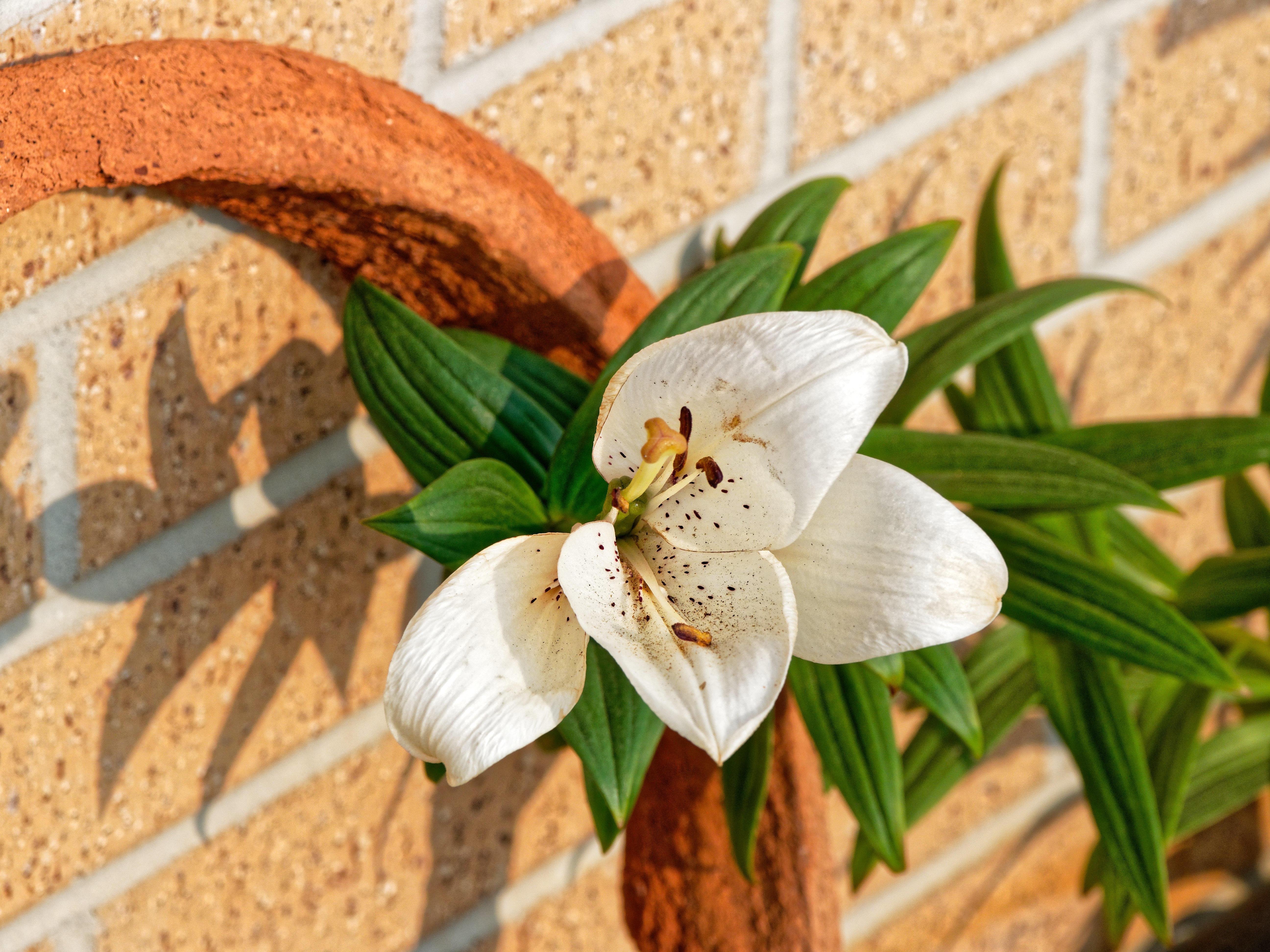 Lily-1.jpeg