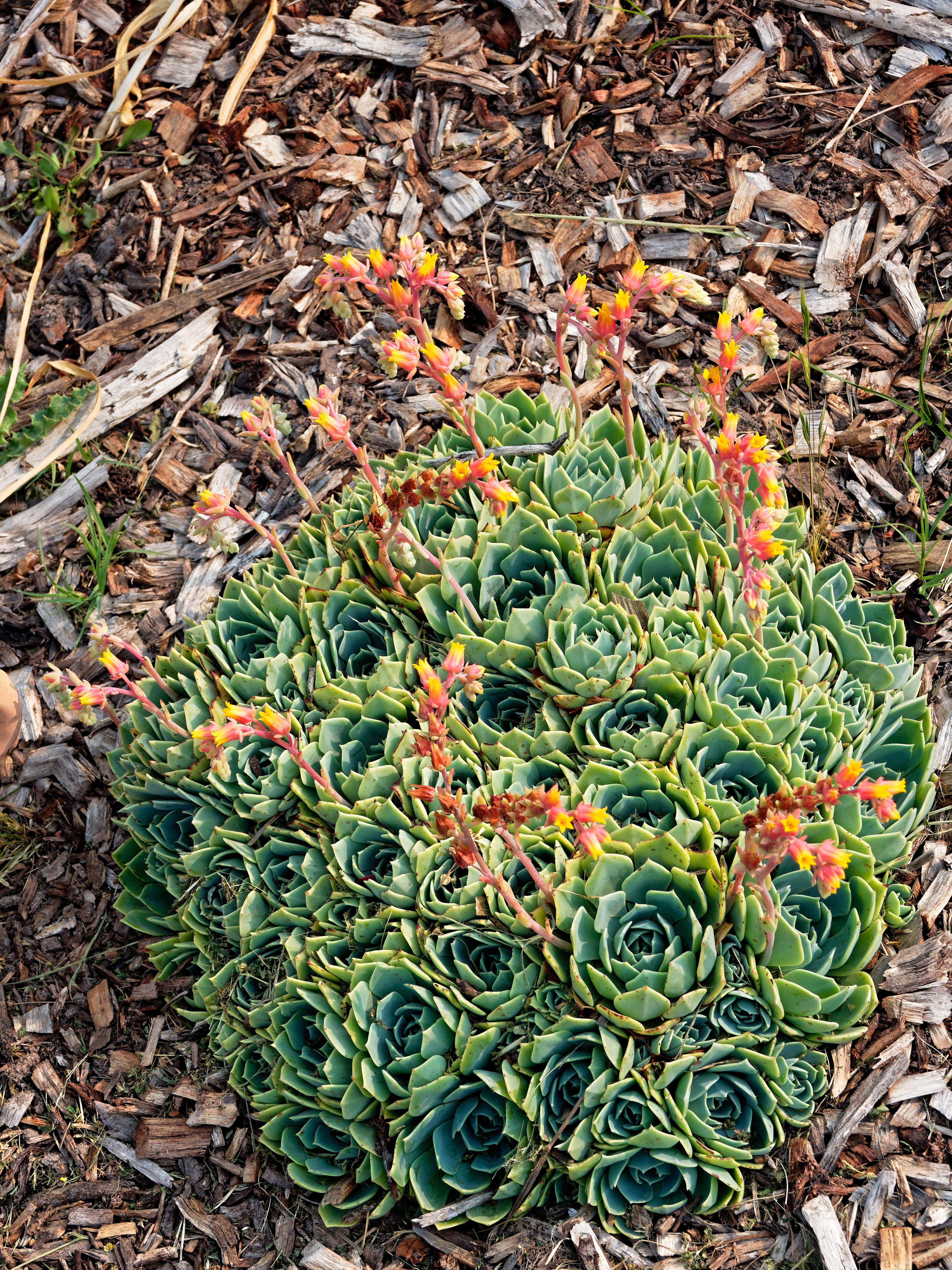 Succulent-3.jpeg