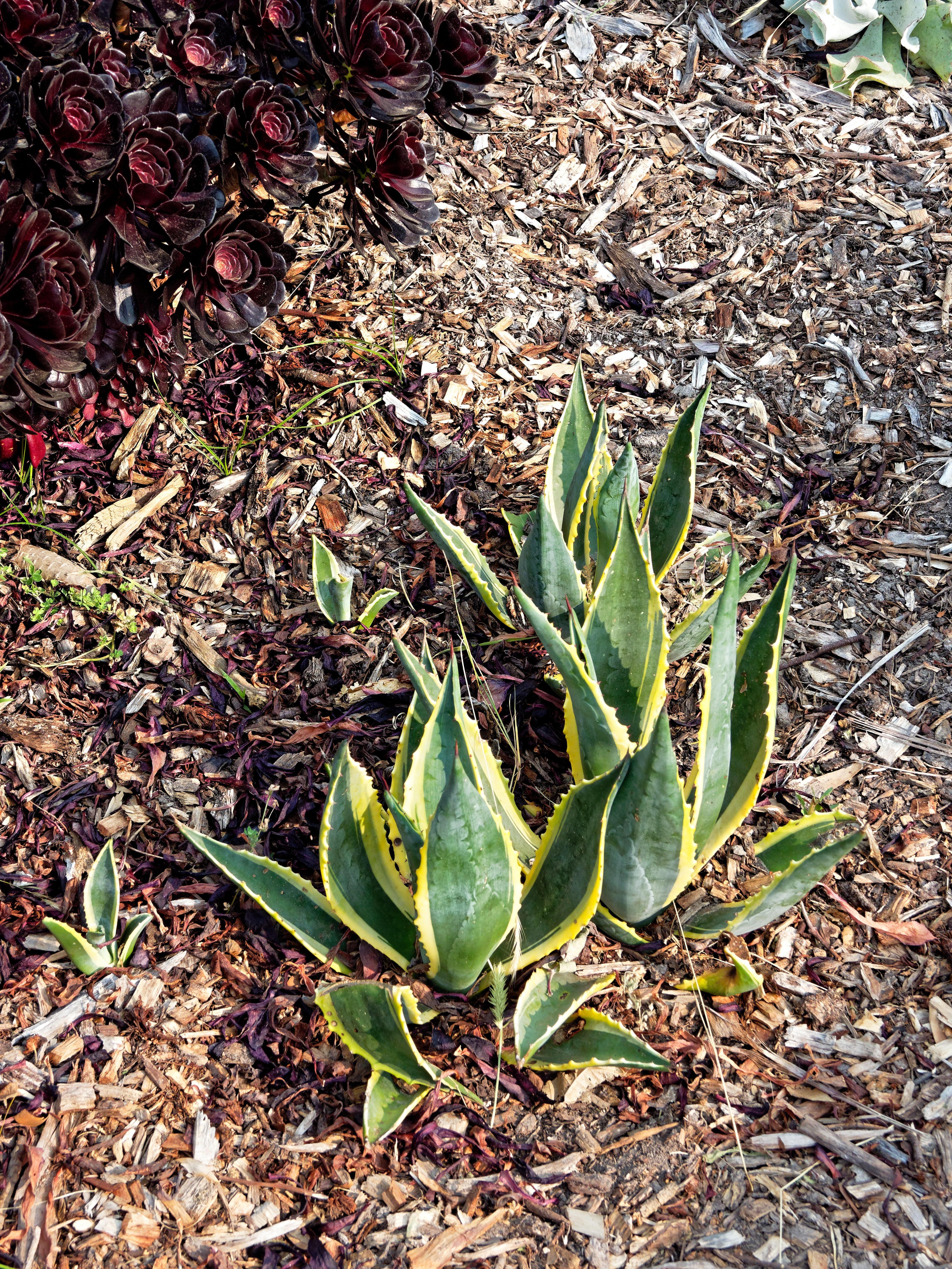 Succulent-8.jpeg