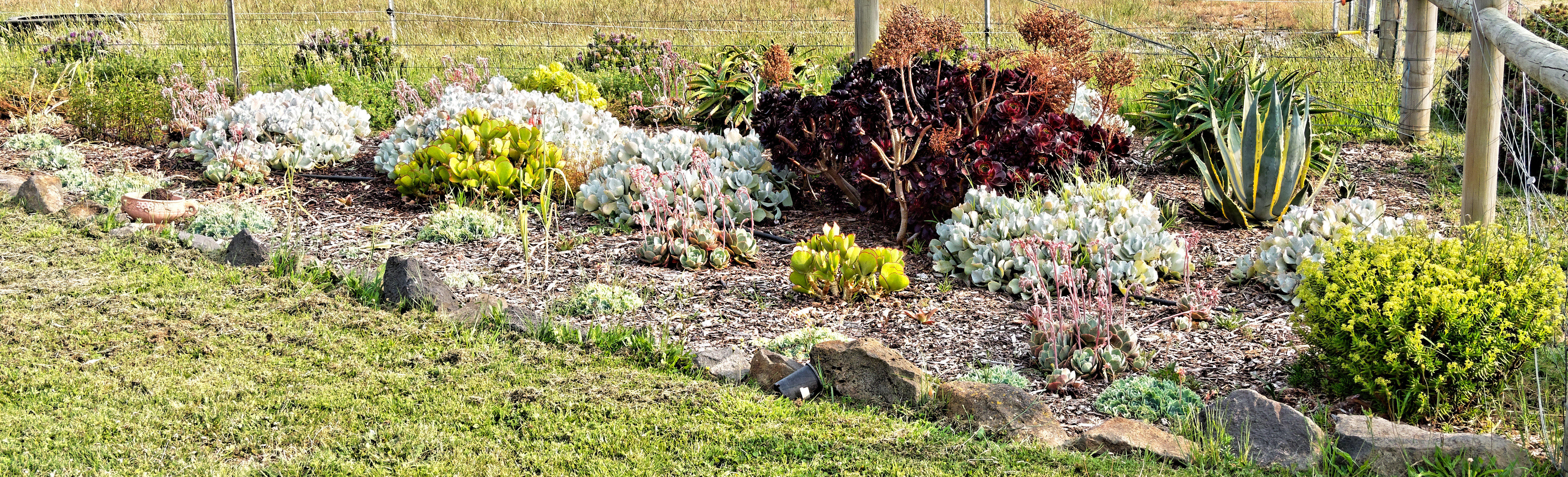 This should be Succulent-garden-1-detail.jpeg.  Is it missing?
