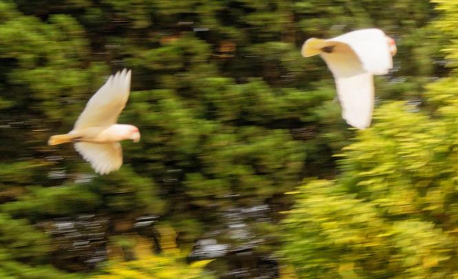 Birds-19.jpeg