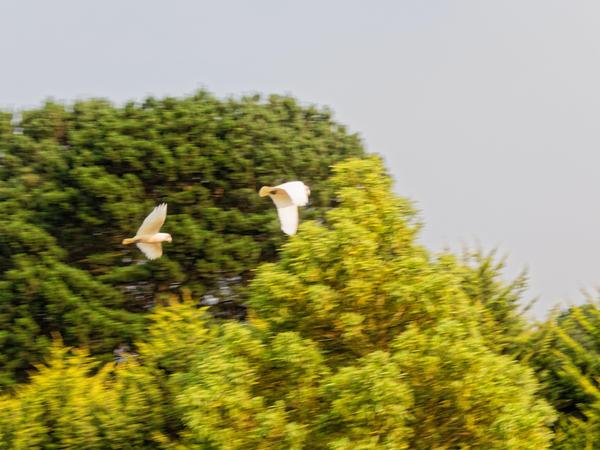 Birds-20.jpeg