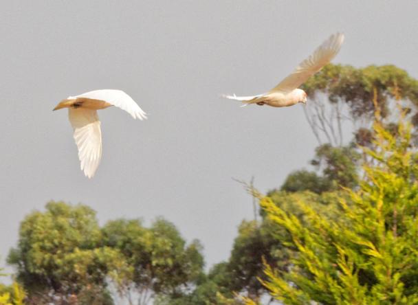 Birds-21.jpeg