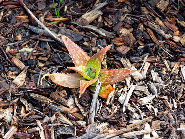 Succulent-10.jpeg