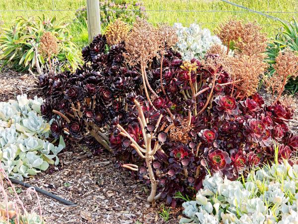 Succulent-6.jpeg