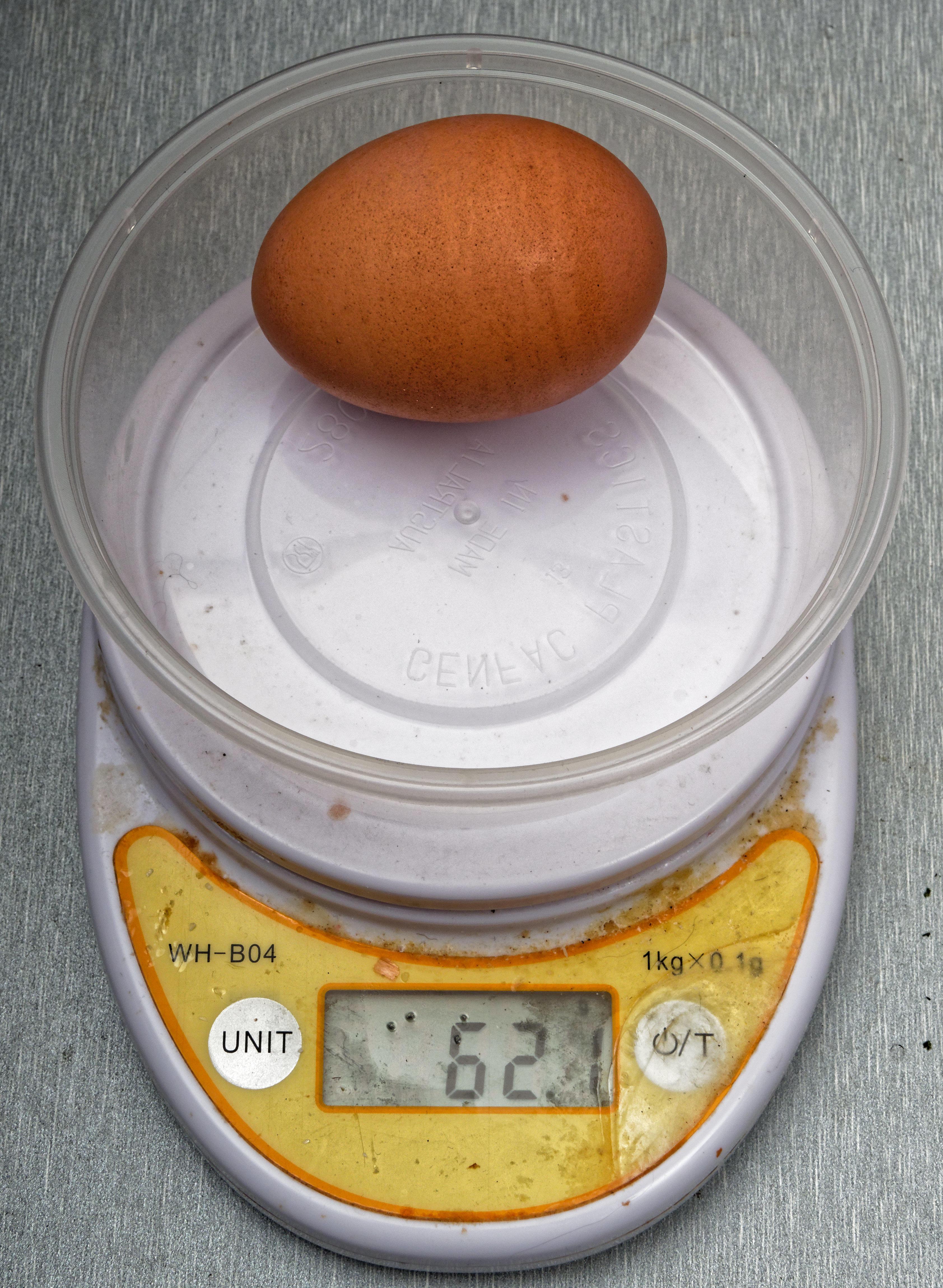 Hen-egg.jpeg