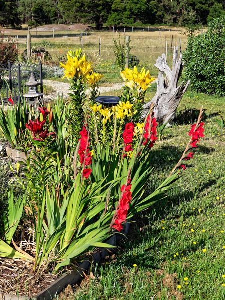 Lilies-gladioli.jpeg