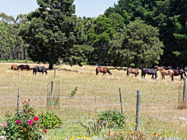 New-horses.jpeg