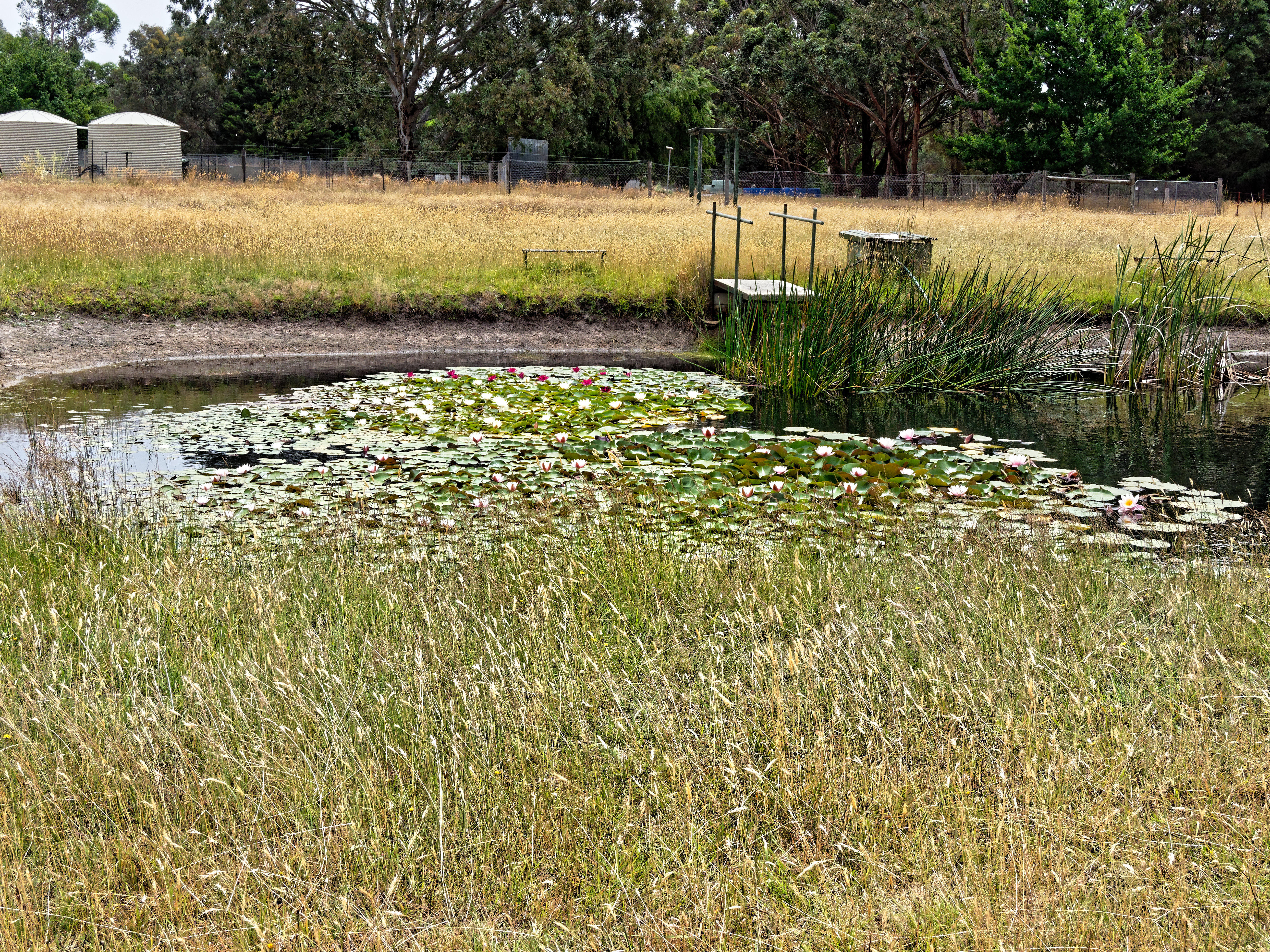 Waterlilies.jpeg