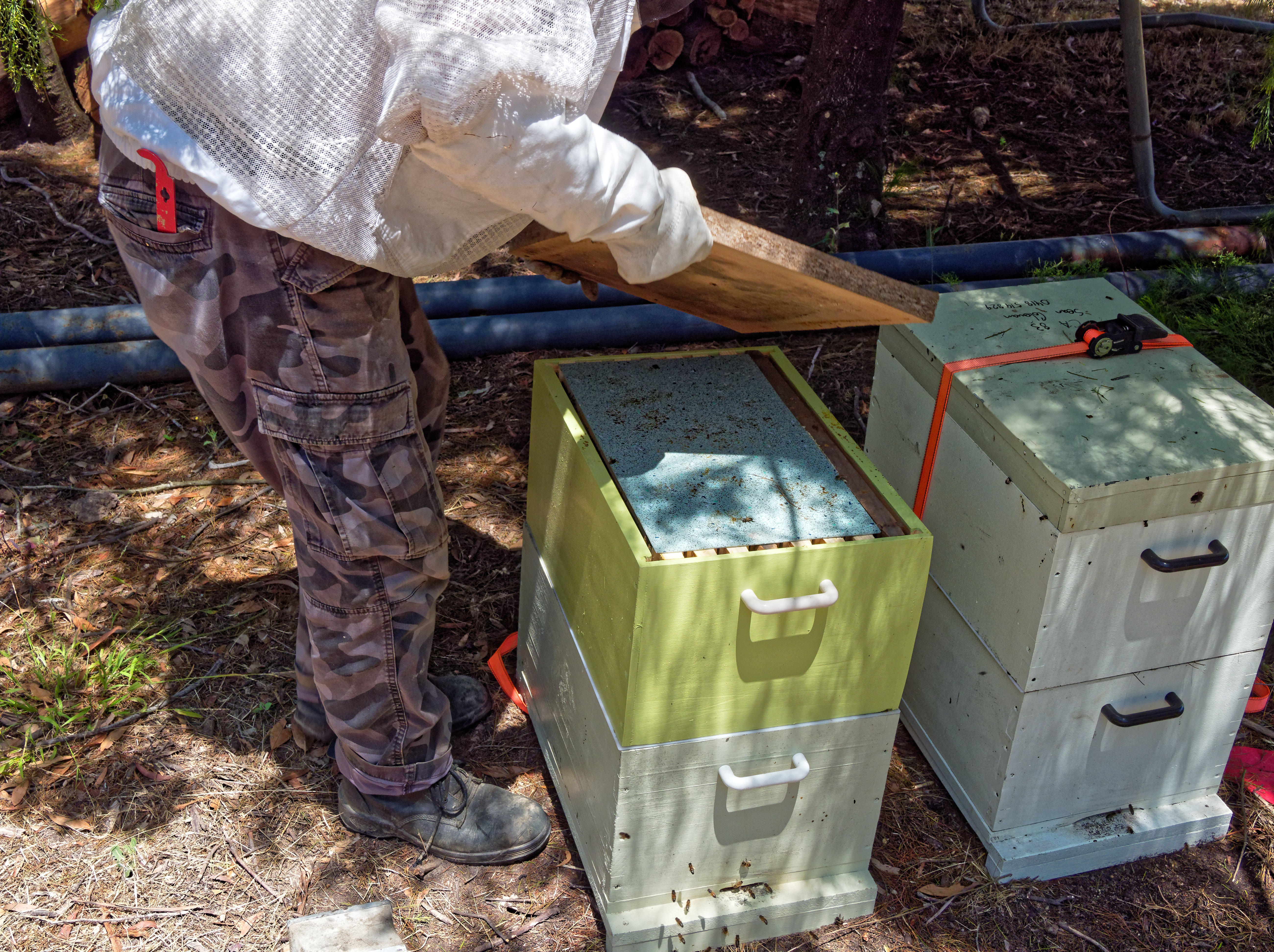 Inspecting-beehives-18.jpeg